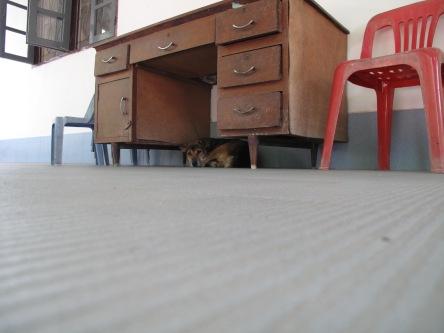 dog under desk