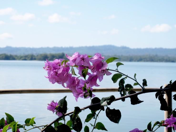 flower nam houm